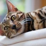 Kat spinder