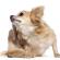 Hundelopper – det skal du vide