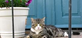 Kattelem – hvilke findes der?