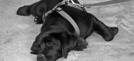 Valg af hundesnor og hundehalsbånd