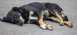 8 råd til at beskytte hunden i sommervarmen