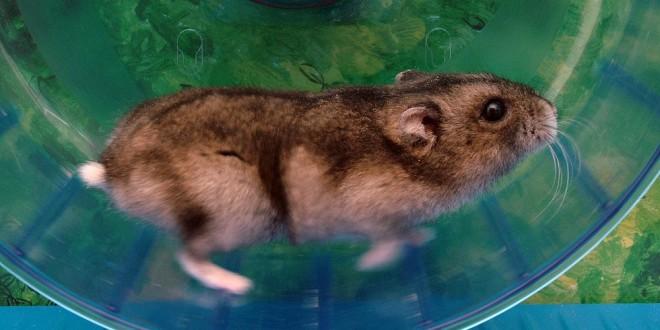 Hamsterhjul – find et godt hjul her