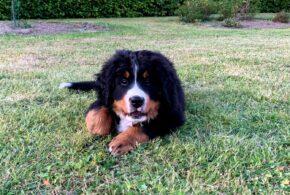 5 gode ting til dig der skal have hundehvalp